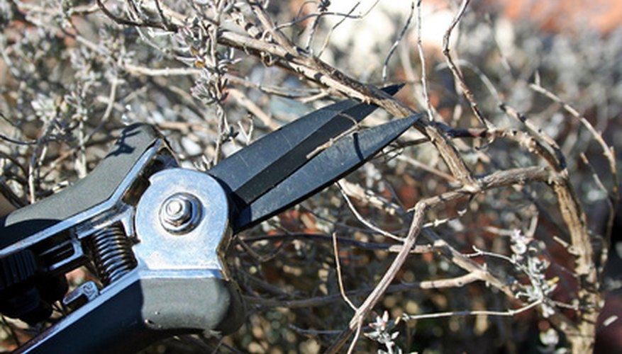 The proper tools make shrub pruning a breeze.