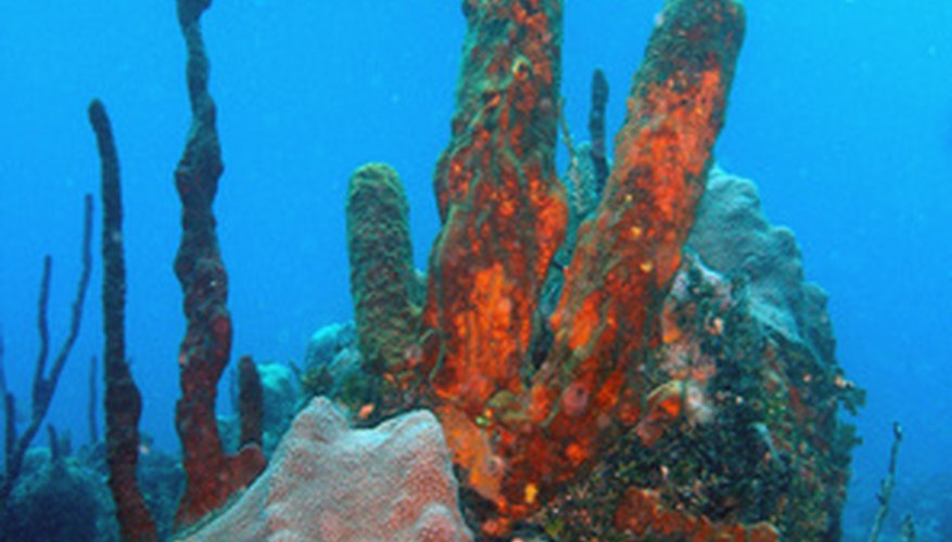 Organisms of the coral reef survive and propagate because of mutualistic relationships.