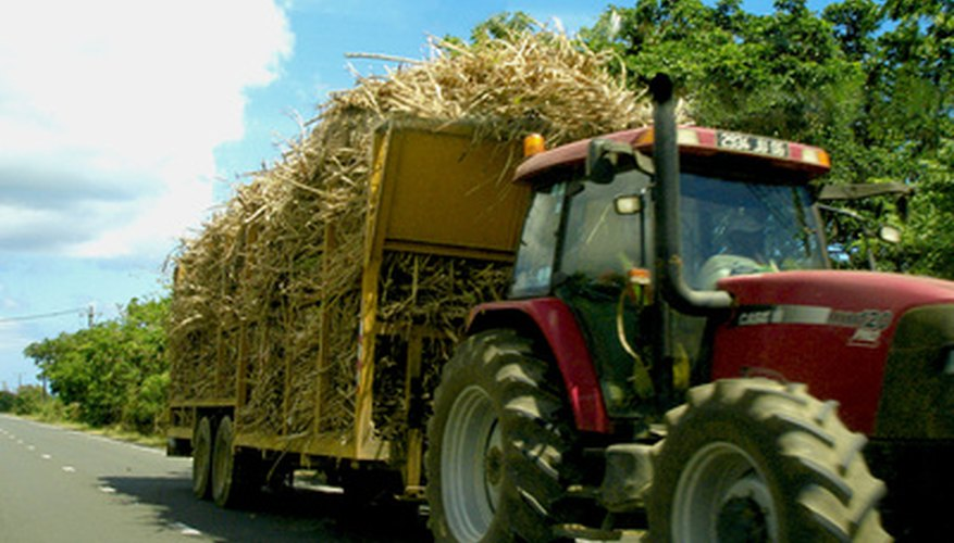Harvesting of sugar canes