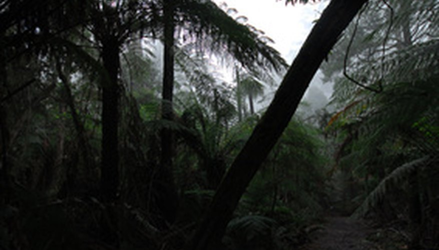Tree ferns are native to the tropics.