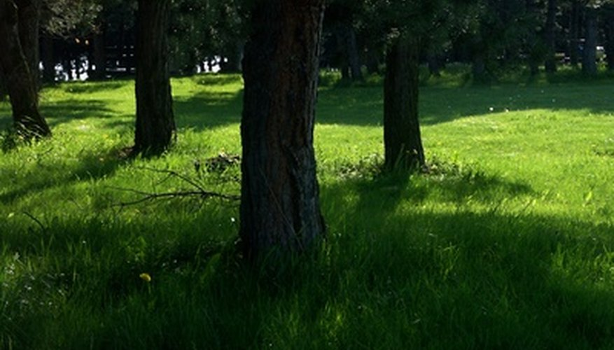 With the right grass and correct cultural practices, you can grow grass in shade.