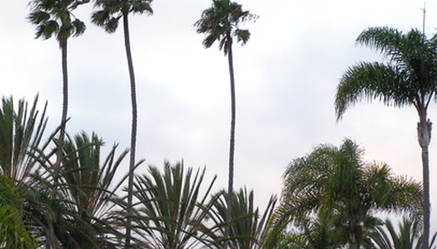 Assorted palm trees