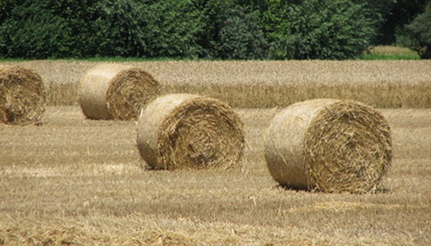 Sweet grasses are a primary component of hay.