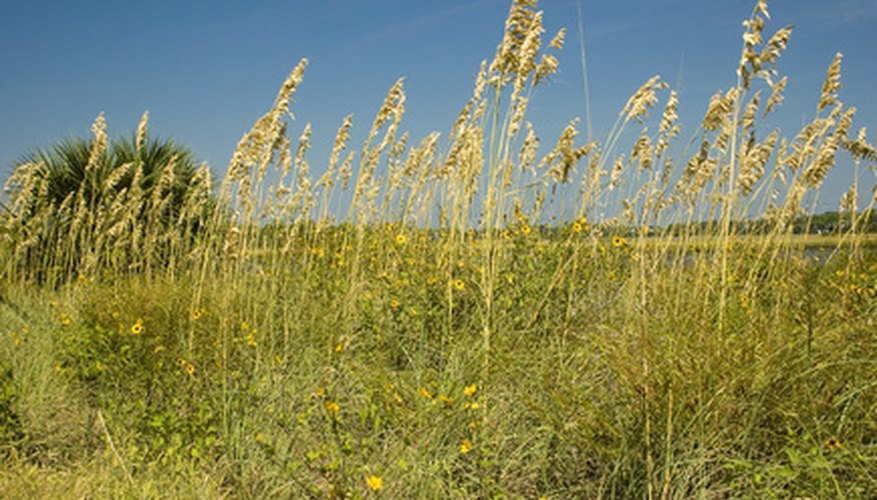 Many native grasses make attractive additions to the landscape.