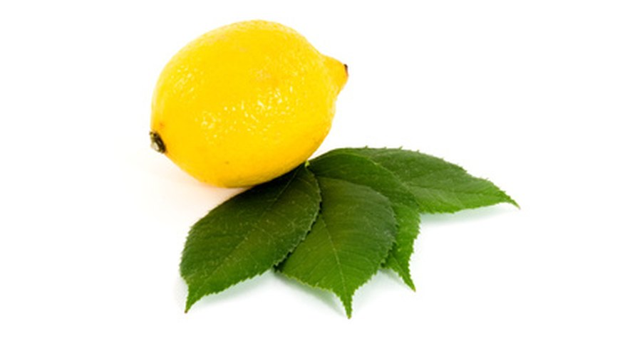 Lemon trees can grow in Canada as potted trees.