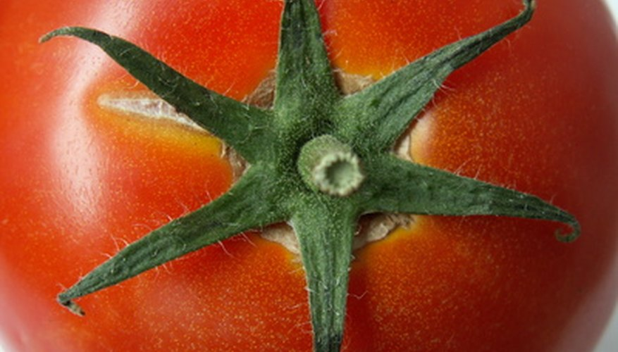 Gardeners can choose from hundreds of tomato varieties.