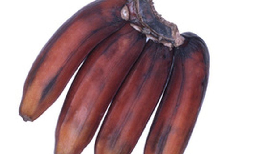 Red bananas are beautiful and delicious.