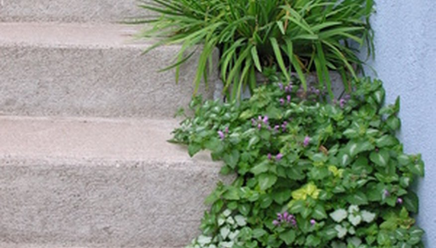 Use plants to add life to the urban home landscape.