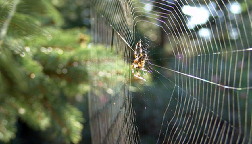 There are thousands of species of spiders in Canada.
