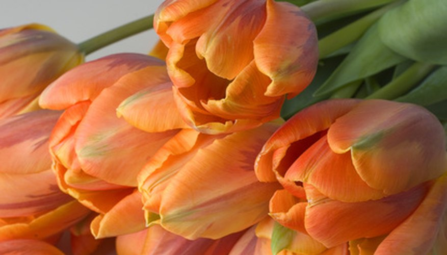 Preserve cut flowers in wax and display them even longer.