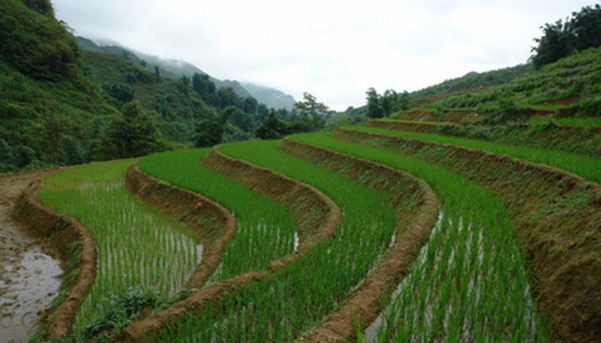 These rice terraces show how effective retaining walls are in holding back soil.