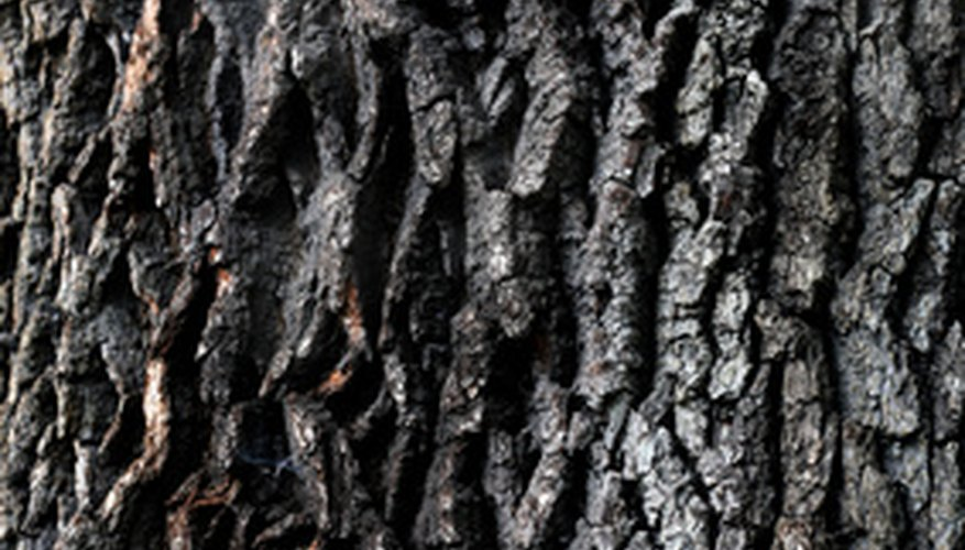 Turkey oak tree bark.