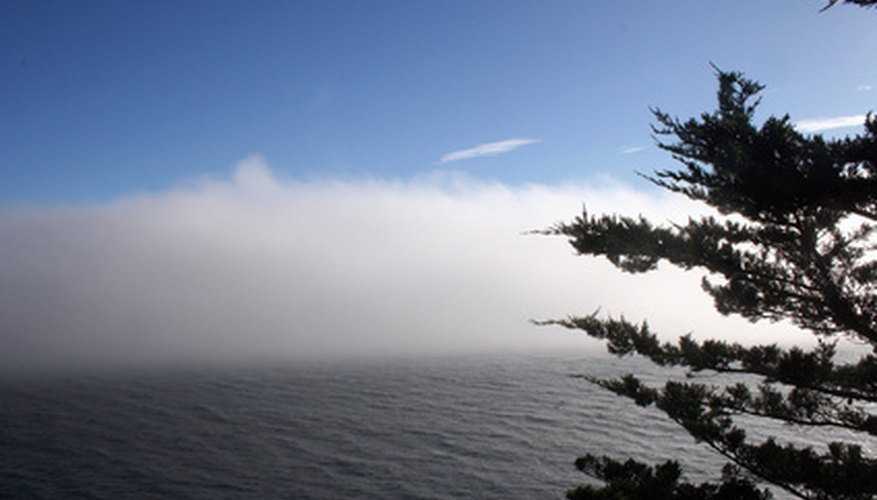 Some ocean currents habitually promote fog.