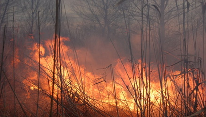 A prescribed burn can enhance a fescue field.