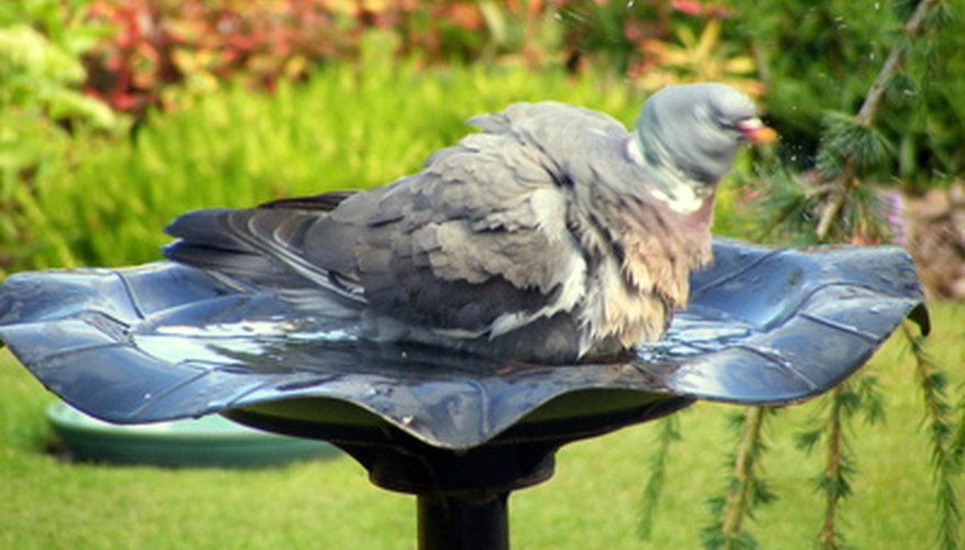Flower-lined bird baths bring winged visitors into the garden.