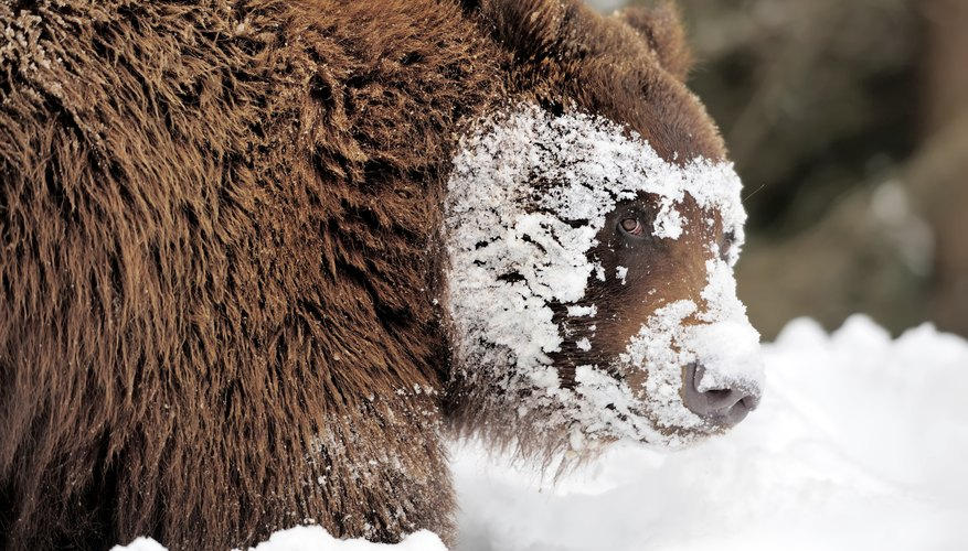 Because the winters can be so challenging, many animals hibernate.