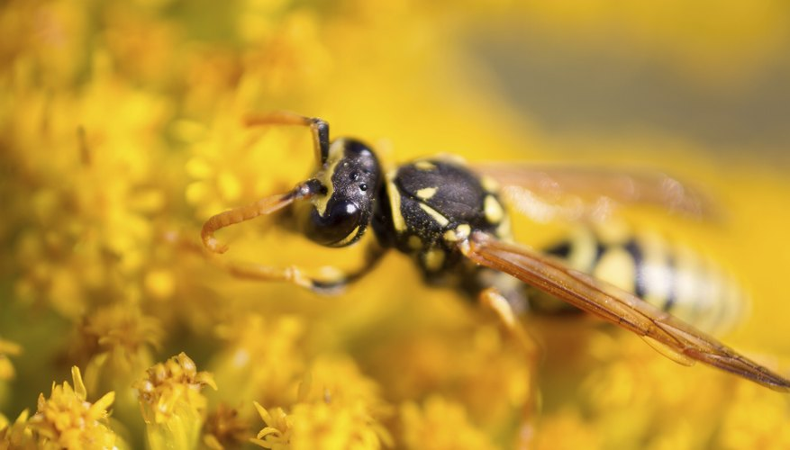 Wasps tend to build up their nests in quiet places.