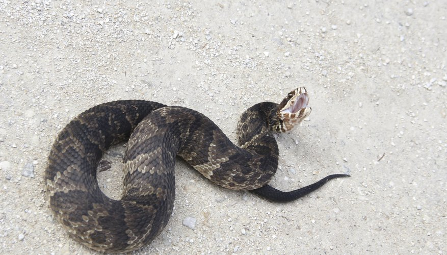 how to catch a water moccasin