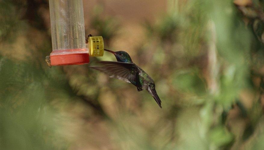 Cómo mantener a las aves alejadas del alimentador Hummingbird | Sciencing