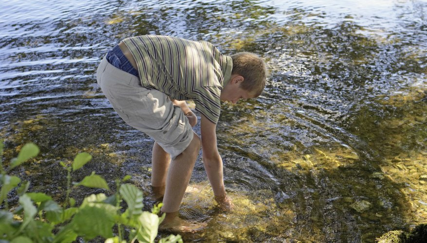 Freshwater invertebrates occupy bodies of water, such as lakes and streams.