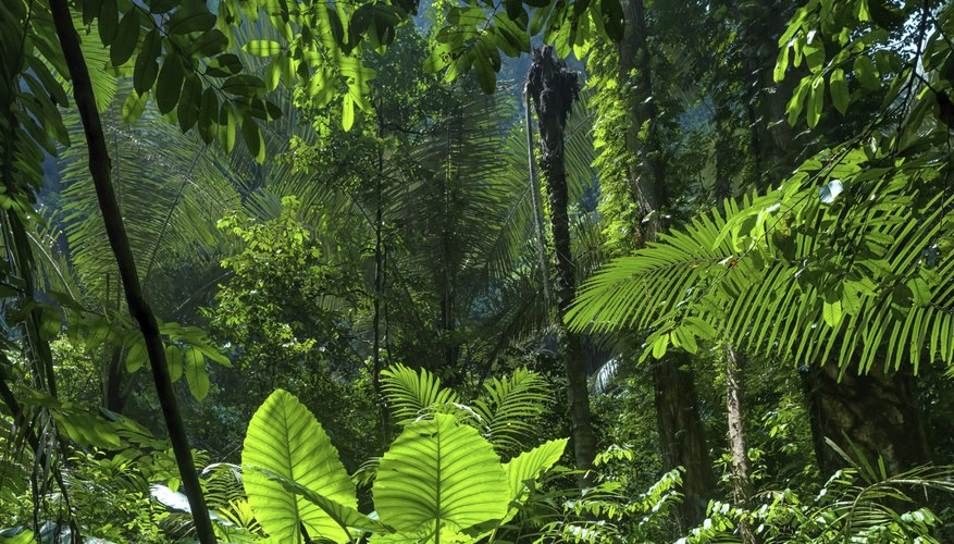 Adaptations of Animals in the Tropical Rain Forest | Sciencing