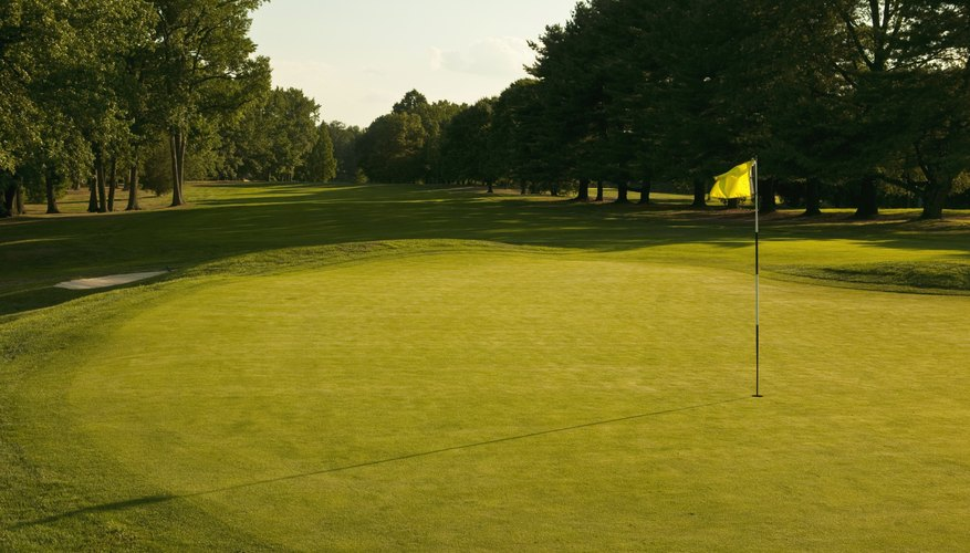 Zeon zoysia is frequently used for golf fairways.