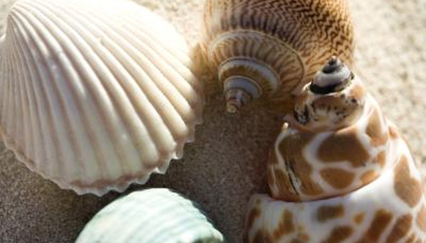 Seashells can be your path to profitability.