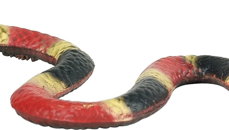 The eastern coral snake has a distinct red-yellow-black stripe pattern.