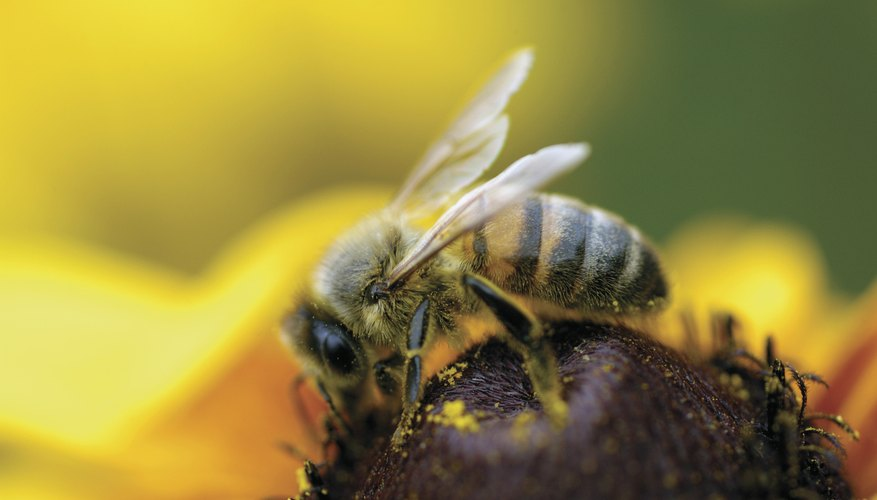 Flowers produce perfume to attract bees.