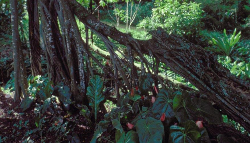 Biotic Factors of the Rain Forest | Sciencing