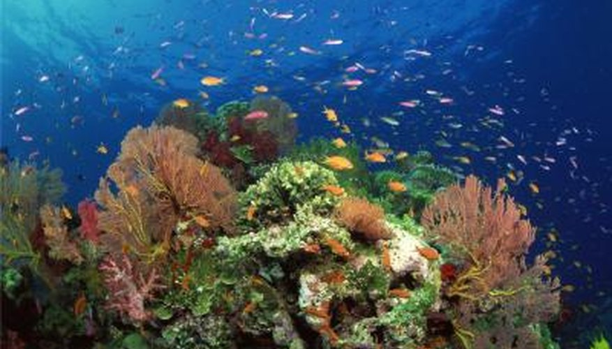 Coral reefs are natural choices for ecosystem models.