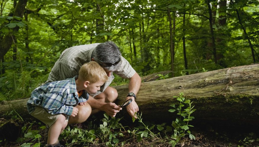 Adult and young boy using a magnifying glass to look at something in the forest.