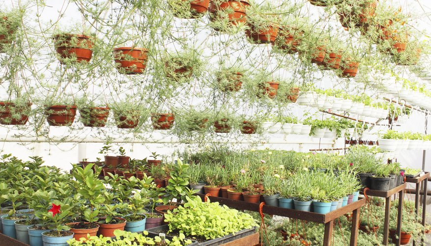 Greenhouse shelving is inexpensive and easy to build.