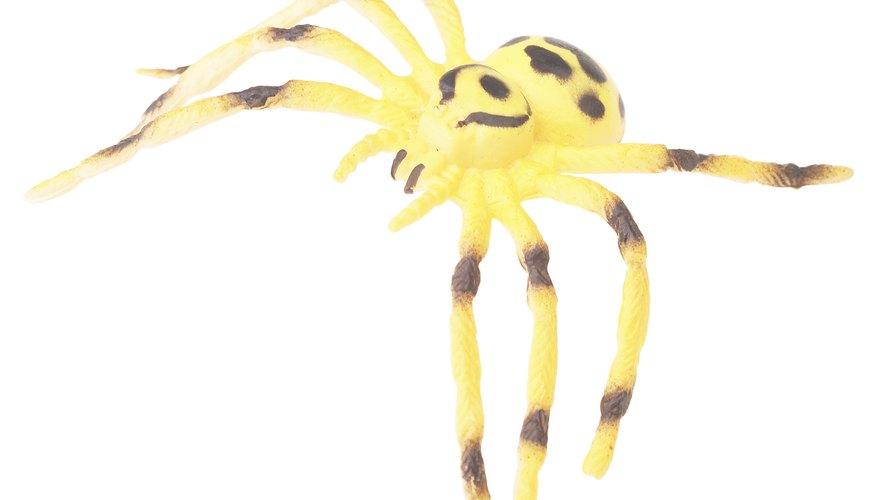 Common North Dakota Spiders | Sciencing