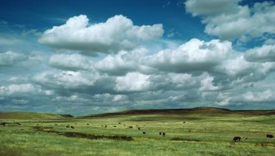 Climate in Temperate Grasslands | Sciencing