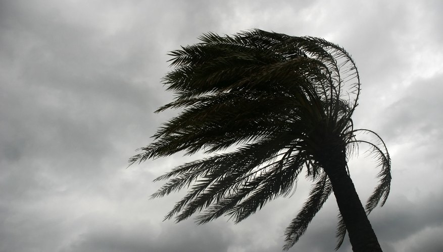 Wind blowing palm tree