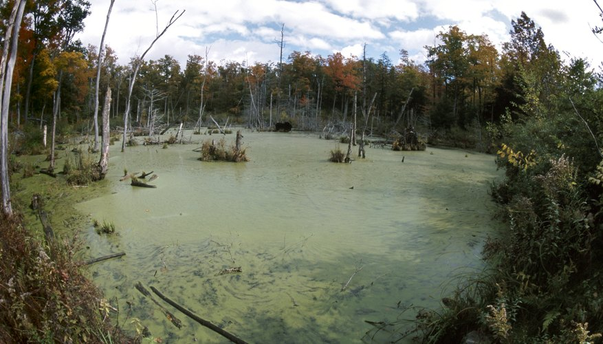 Causes and Effects of Eutrophication | Earth Eclipse