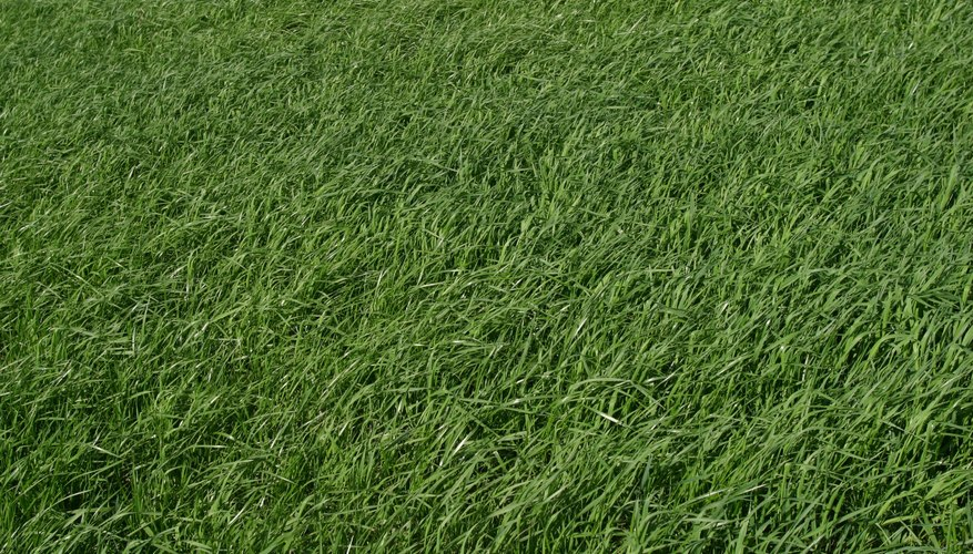 Laying grass pads yourself can save you hundreds of dollars.