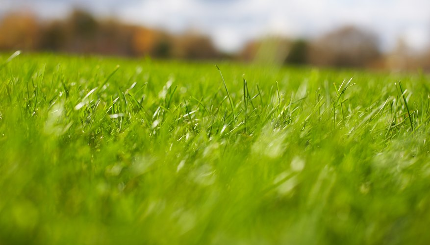 An appropriately fertilized lawn is more drought-resistant in heat and dry weather.