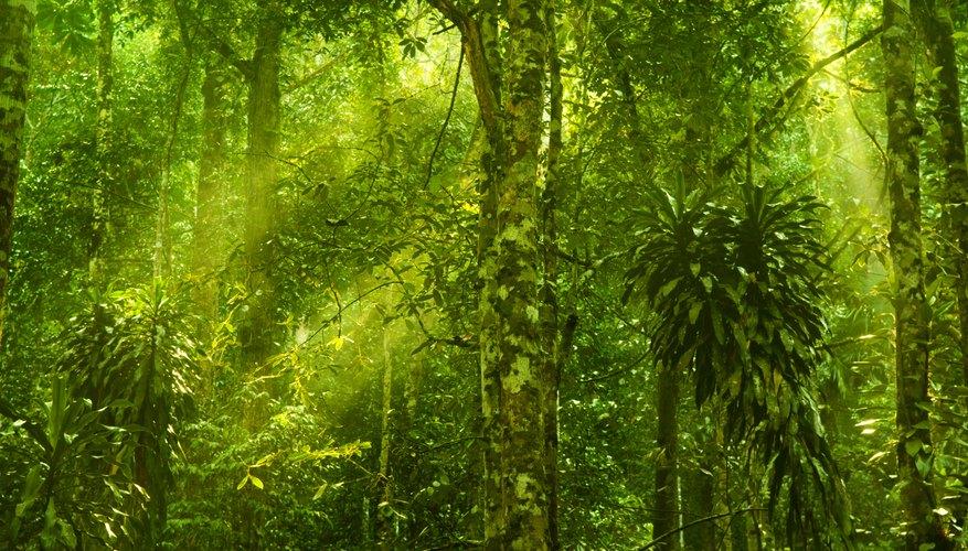 Abiotic Factors of a Rain Forest | Sciencing