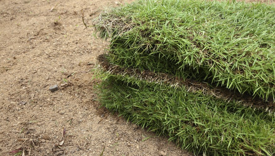 New sod ready to be planted.