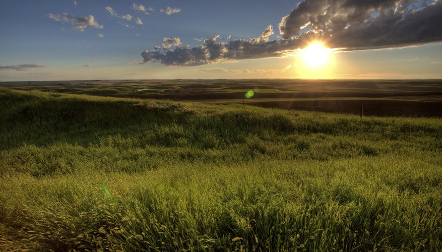 temperate grassland Interesting grassland facts for kids and adults we showcase the definition, as well as the plants, animals, and climate facts about grasslands biome.