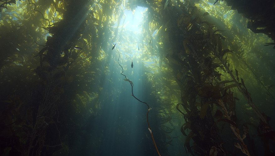 Seaweed comes in many shapes, sizes and colors.