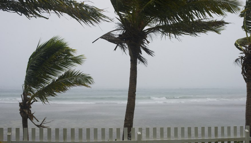 Palm trees being blown during typhoon.