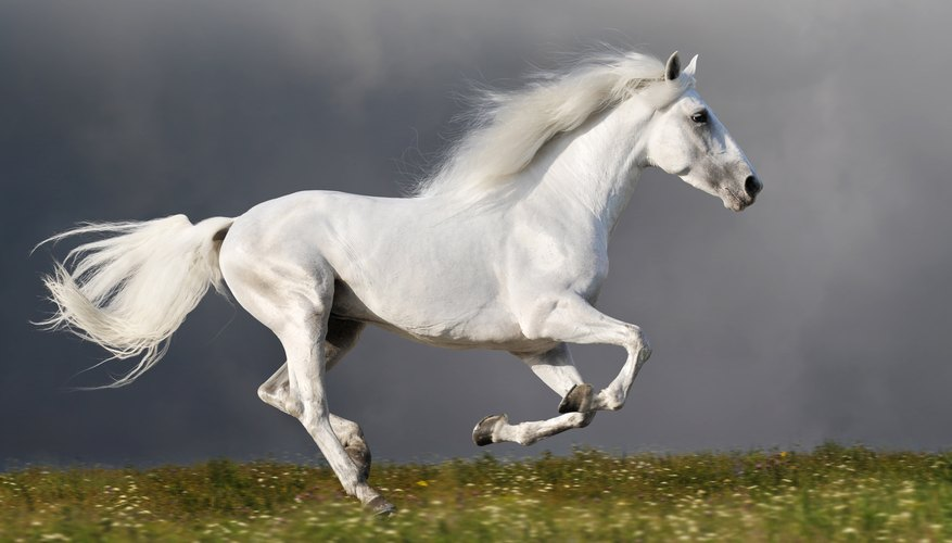 A horse's speed depends upon the gait it is using.