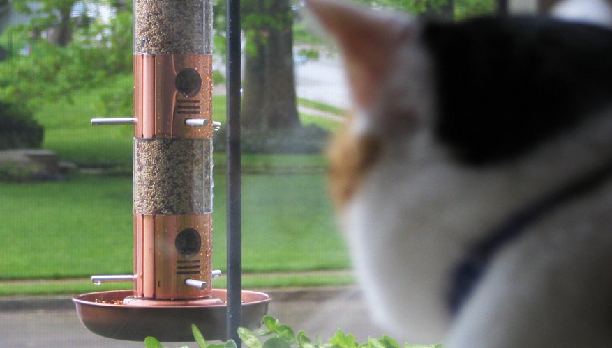 A cat watches a birdfeeder from inside a window.