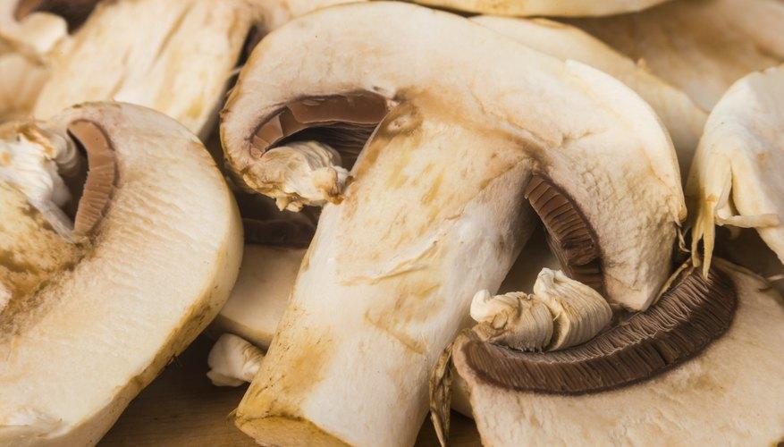 Mushroom spawn production