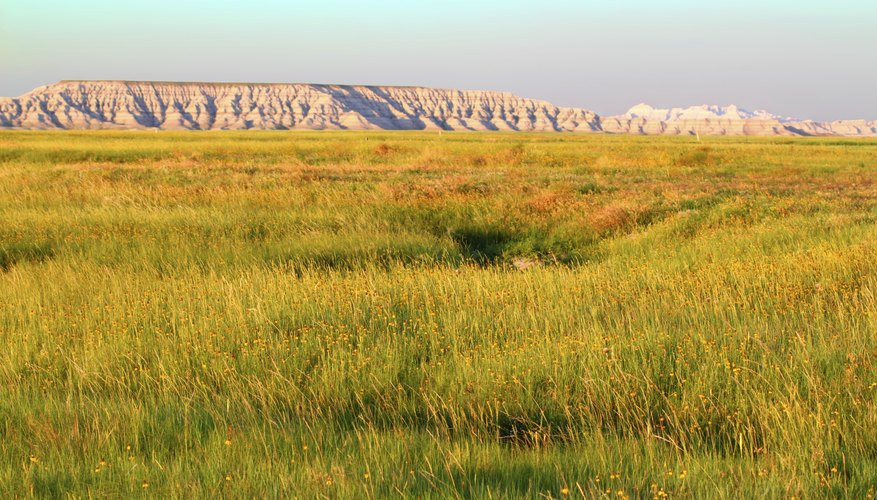 temperate grassland biome physical features  · in physical geography, a steppe (russian [st ep ]) is an ecoregion, the montane grasslands and shrublands temperate grasslands, savannas biomes.
