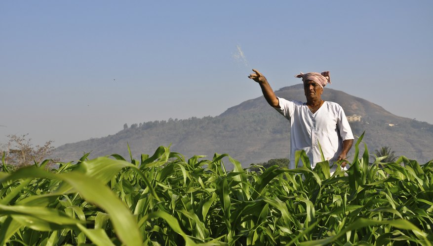 A farmer is throwing fertilizer on his crops.