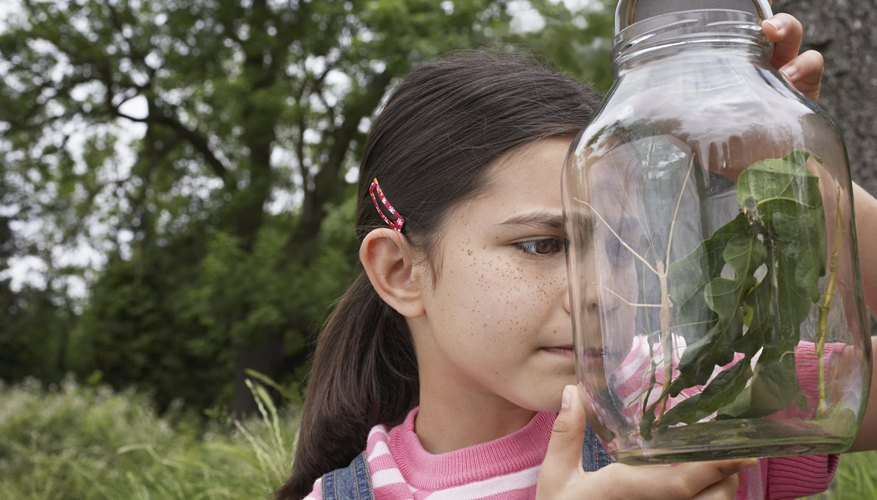A girl collects and examines a walking stick in a jar outside.